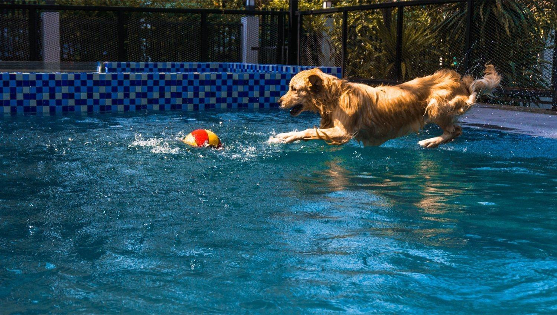 La piscina no es del gusto de todos los perros, pero algunos la disfrutan mucho
