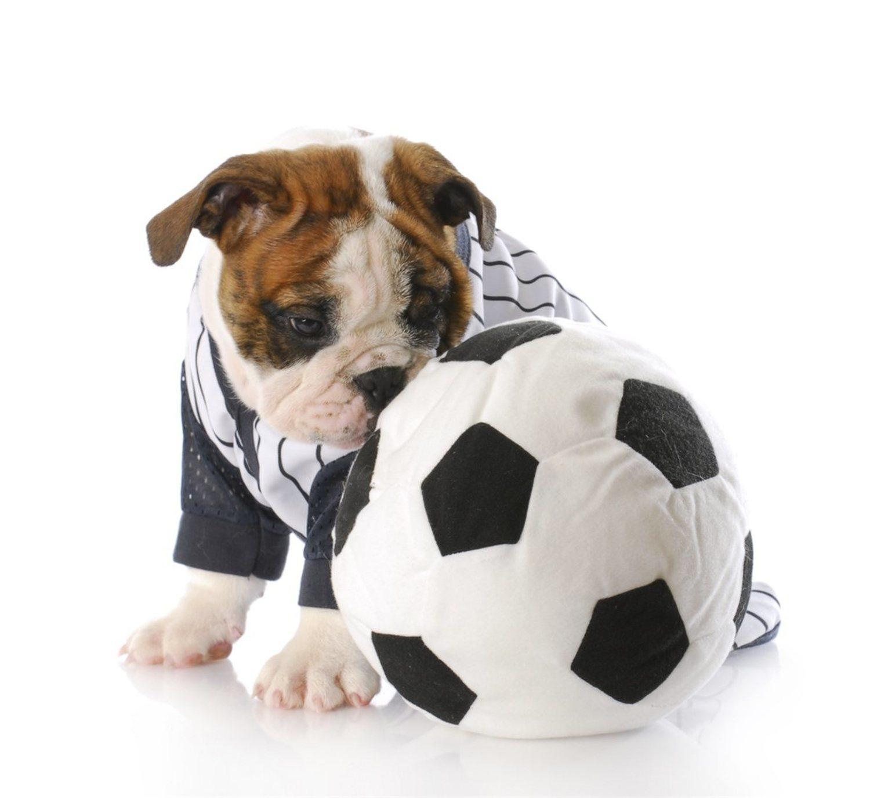 Tal vez tengas que incentivar a tu perro con una pelota para que corra al principio