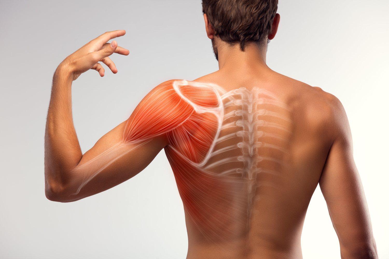 Los músculos superficiales están situados en la parte superior de la espalda.