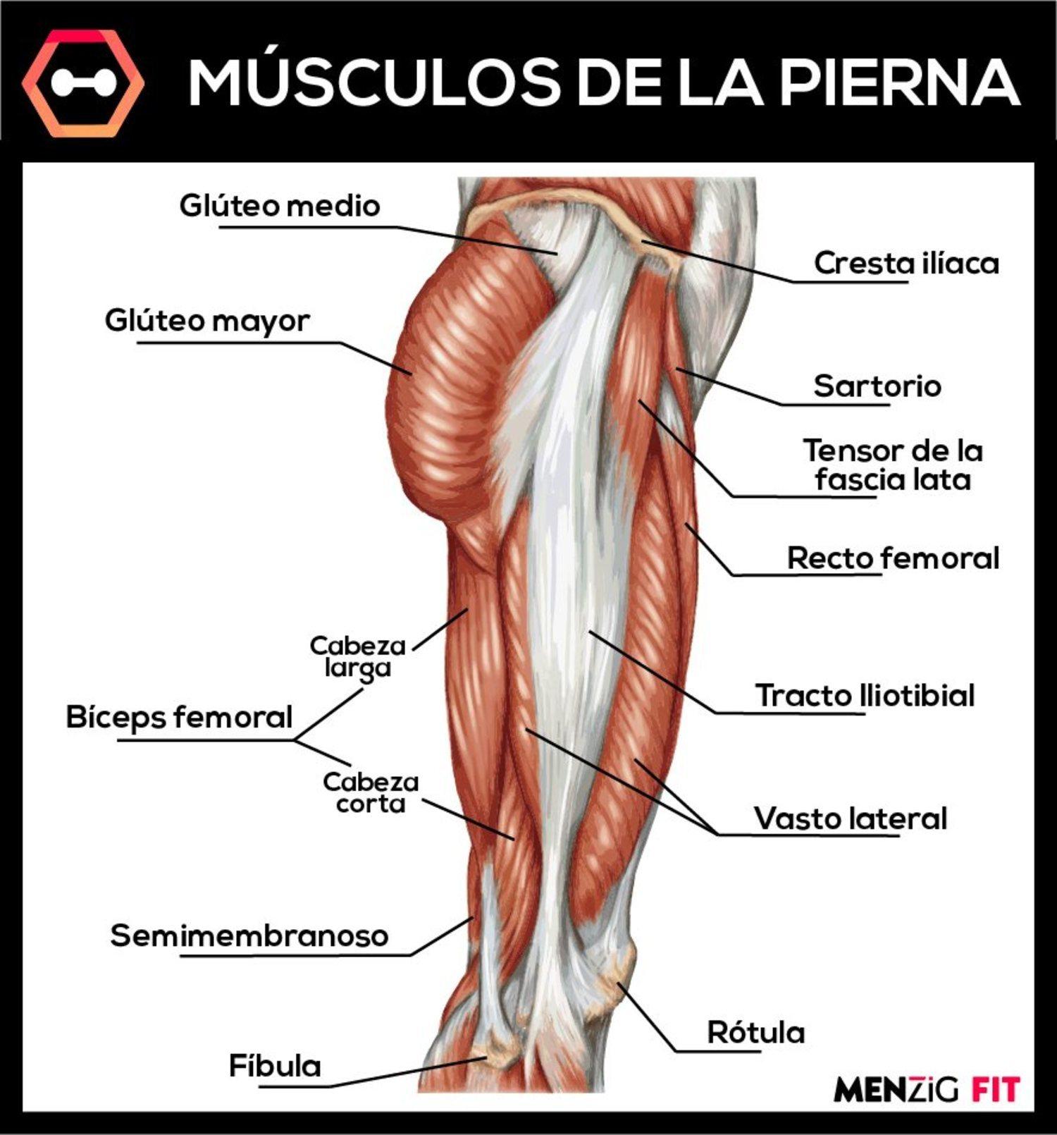 musculos de la pierna parte posterior